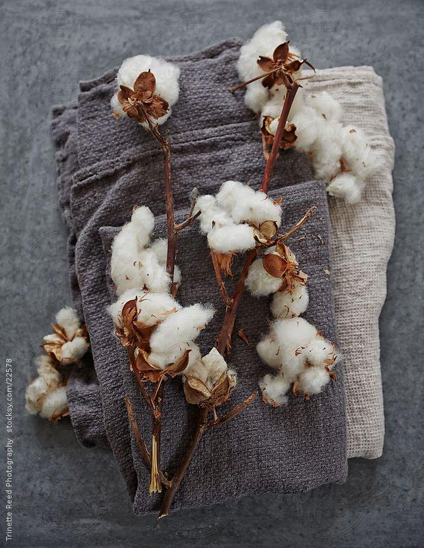 101 best Fleurs de Coton images on Pinterest   Cotton fields ...