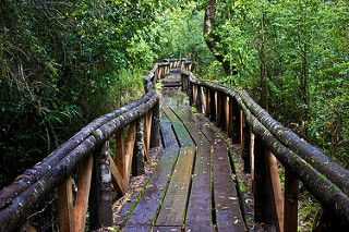 Wild path leading to a lush forest inn Central Chile