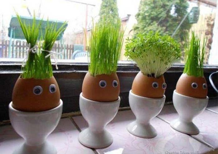 Plantas pequenas podem ser cultivadas em cascas de ovos (Imagem: Architecturendesign)
