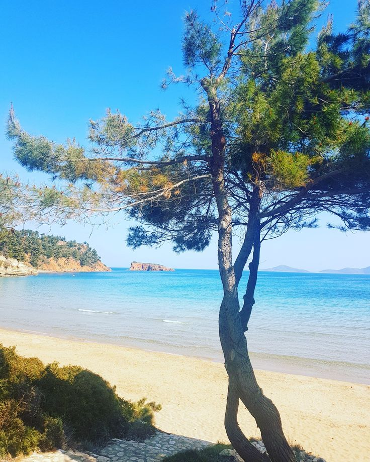 Chrisi Milia beach...🌊🌊 www.angelosalonissos.com #myisland #alonissos #sporades #greece #beach #sun #sea #sand