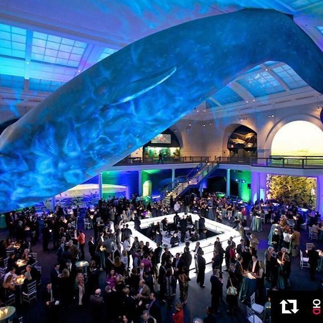 Weu0027re wild about this ??? The American Museum of Natural History is one of many historical and classic venuein NYC. & 161 best Best Event Lighting images on Pinterest | Event lighting ... azcodes.com