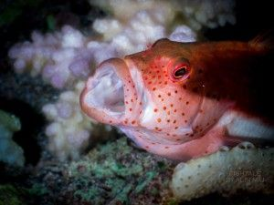 photo by Alin Miu #reef #underwaterphotography
