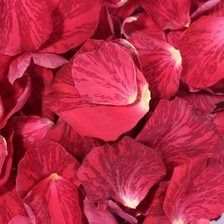 Click to Order Stripey Red Rose Petals