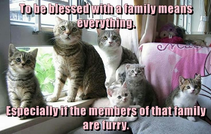 To be blessed with a family means everything.  Especially if the members of that family are furry.