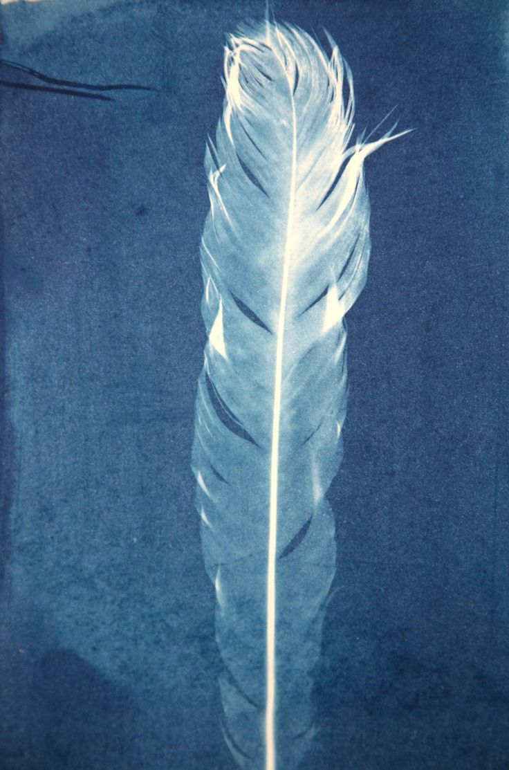 Love this idea of cyanotypes. Wonder if you could make them on fabric?
