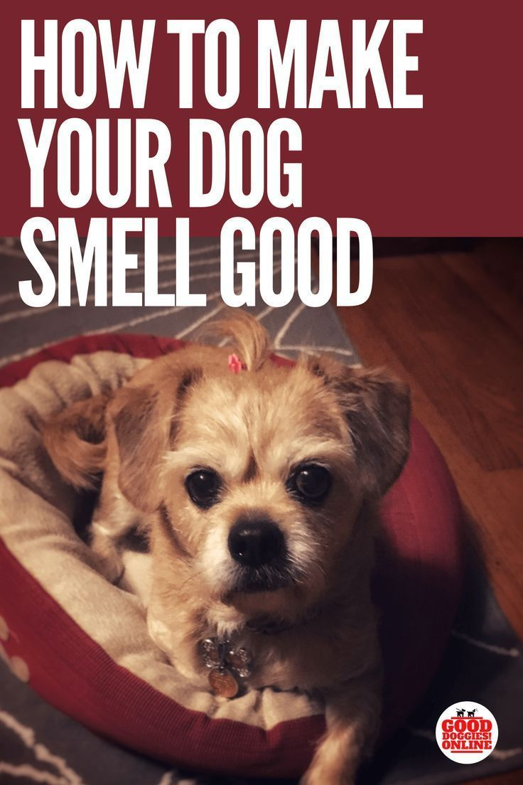 10 Pro Tips For Dog Training By Experts In 2020 Dog Smells Your Dog