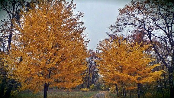 Bronze trees