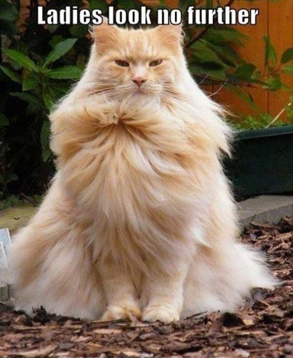 The true Farao!   All about #dogs #cats here, check it out