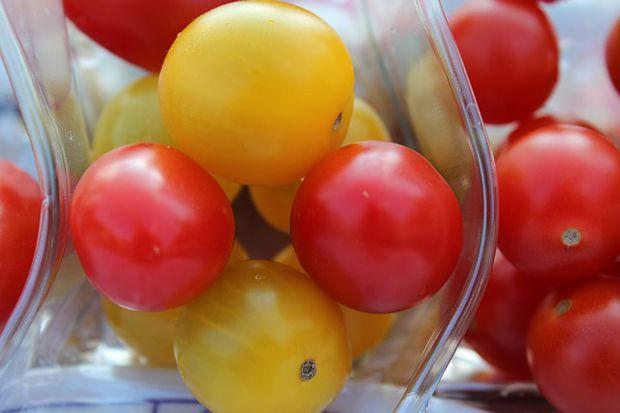 Cultivo del tomate cherry amarillo #jardineria