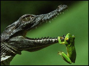 Cute Frogs | frog. A wild guess:- a young crocodile has tried to snatch the frog ...