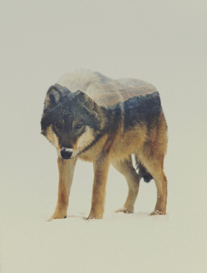 Portraits d'animaux en double exposition | Fisheye
