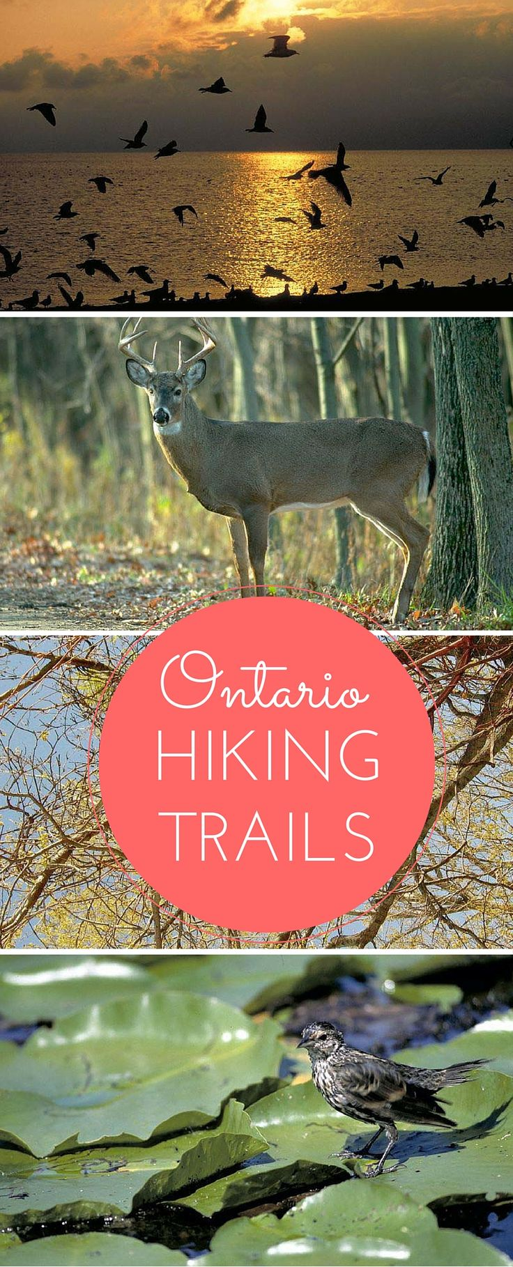 Experience Hiking Trails in Ontario, Canada.