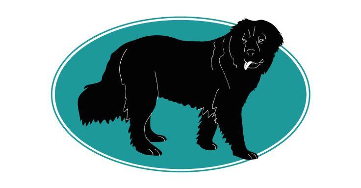 Le Terre Neuve ou Newfoundland est un chien de tempérament calme sa docilité et son stoïcisme à toute épreuve en font un chien. Une race offerte par l' Assurances Chiens Assur O'Poil. Pour plus d'informations, rendez-vous sur http://www.assuropoil.fr