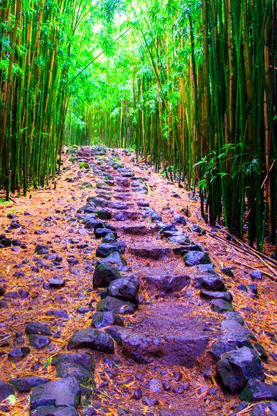 Bamboo forest - Hiking the Pīpīwai Trail, Haleakala National Park, Maui, Hawaii