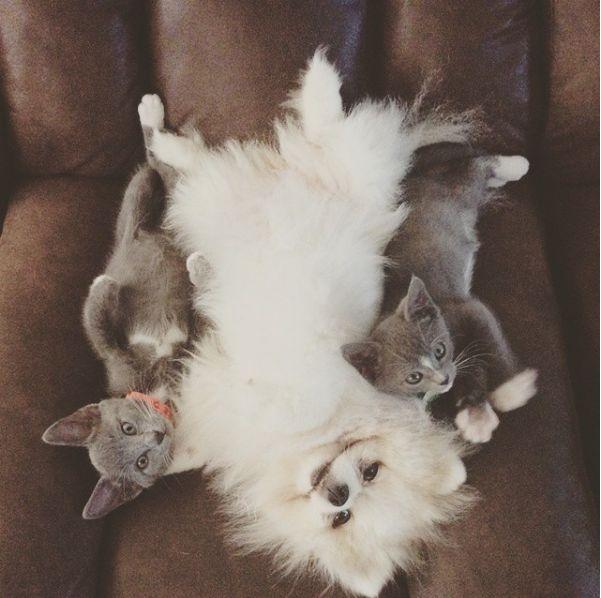 Witte kees met twee katten