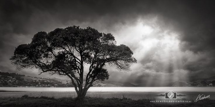 Black and white photo of a tree with sunbeams through clouds at Duvauchelle, Banks Peninsula.