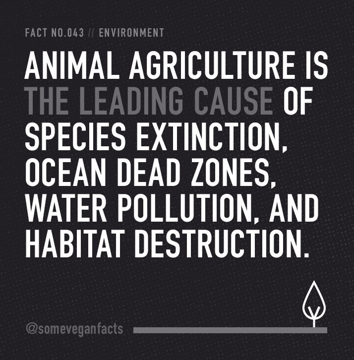 Animal agriculture is the leading cause of species extinction, ocean dead zones, water pollution, and habitat destruction.