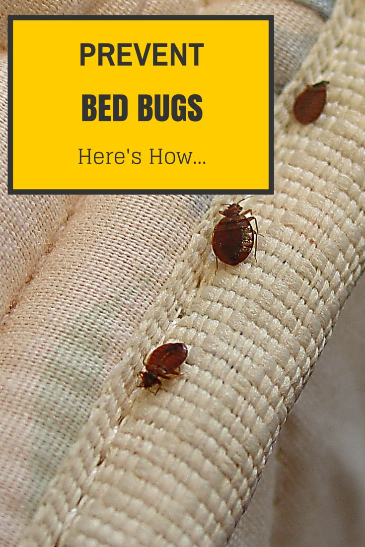 Bed Bug treatment can be expensive. Learn how to prevent an infestation in the first place http://www.fightbugs.com/how-to-prevent-bed-bugs/