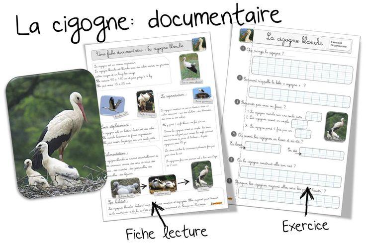 La cigogne blanche : fiche documentaire | Bout de Gomme