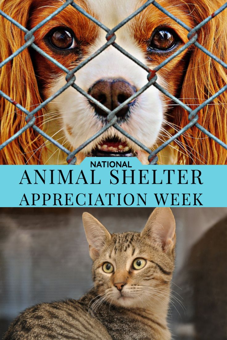 National Animal Shelter Appreciation Week National Animal Animal Shelter Animals