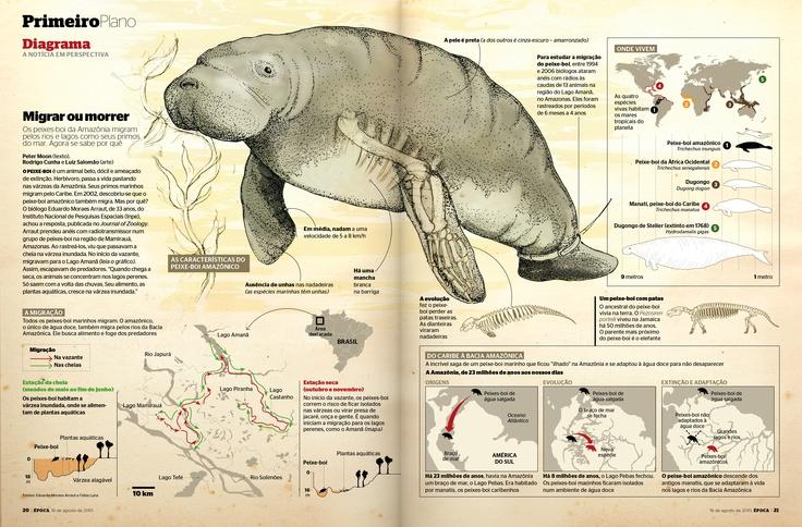 Edição 639 - Migrar ou morrer - versão online: http://revistaepoca.globo.com/Revista/Epoca/0,,EMI162973-15215,00-DIAGRAMA+MIGRAR+OU+MORRER.html