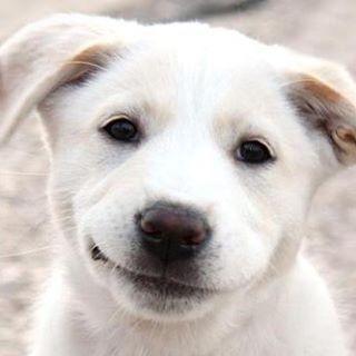 puppyteethingtoys🐶🐶🐶🐶🐶🐶🐶🐶🐶 Puppyteethingtoys.com 🐶🐶🐶🐶🐶🐶🐶🐶🐶 #puppy #puppys #puppydog
