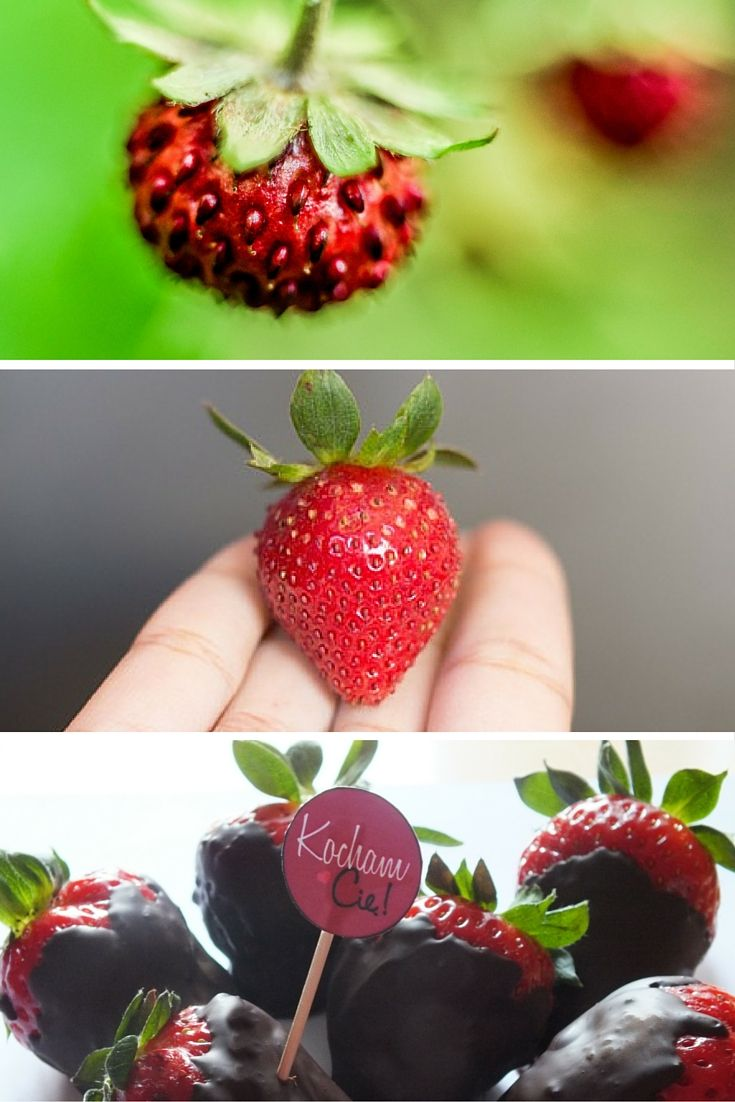 strawberry with chocolate - recepies
