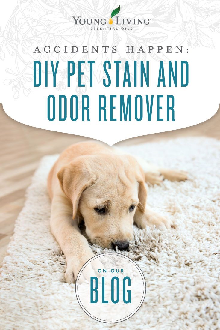 Diy Pet Stain Odor Remover Stuffed Animals