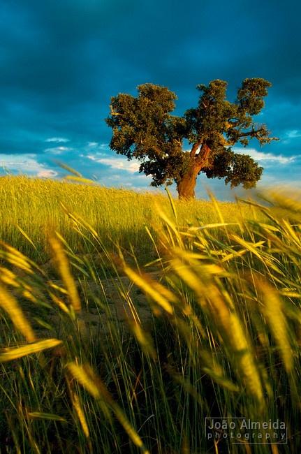 20 Best Cork Oaks Images On Pinterest Corks Cork And