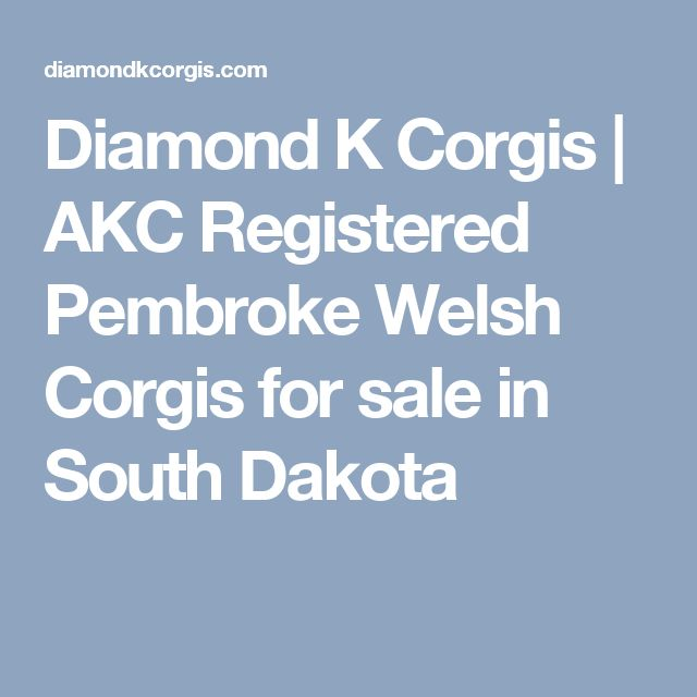 Diamond K Corgis | AKC Registered Pembroke Welsh Corgis for sale in South Dakota