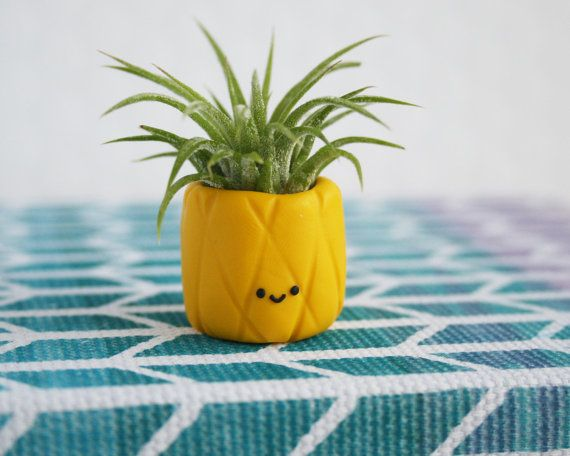 Air Plant Pineapple, Cute Fruit Airplant Holder, Small Tillandasia Pineapple Air Plants, Cute Air Plant Holder, Desk Accessory, Teacher Gift