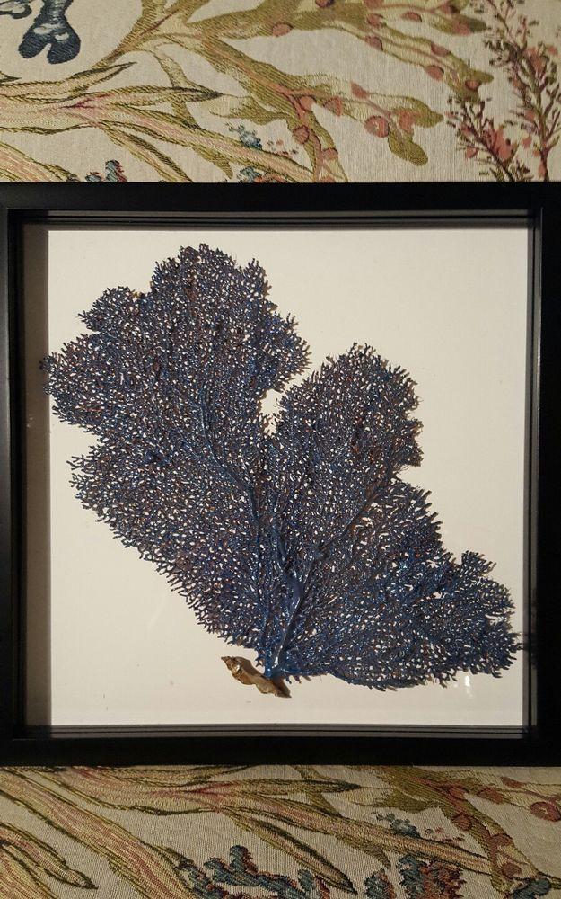 Framed Sea Fan Coral Shadow Box Coastal Art #Modern