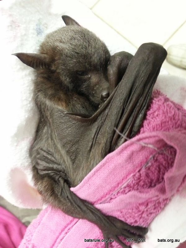 at the 'bat cave' 14/06/2014 1of2 — Bats_Rule! Help Save WildLife