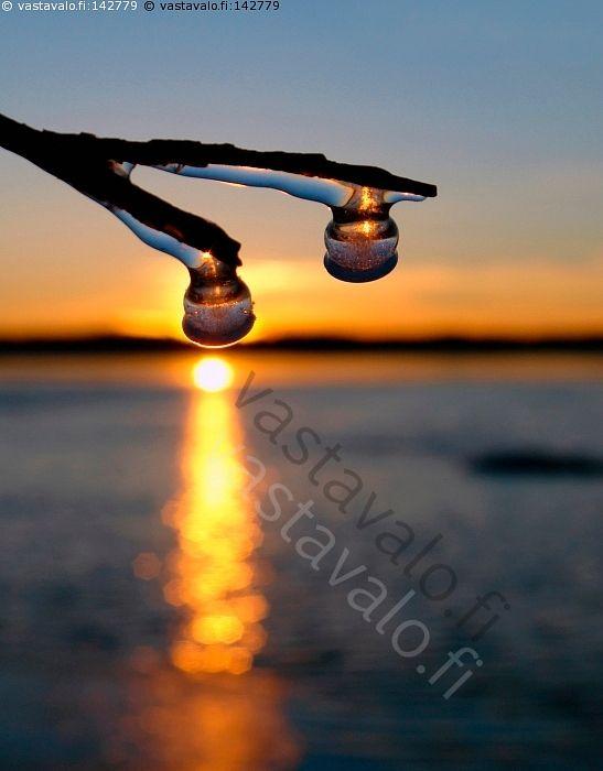 Talvinen auringonlasku  - oksa jää jäätynyt jäässä jääkerros jääpuikko jäähelmi roikkua talvi talven valo aurinko auringon kajo auringosilta vesi järvi horisontti auringonlasku talvimaisema talvivalo talvinen jääpuikko jääpuikot talvipäivä kaamos kylmä pakkanen pimeys valoton vuodenaika  us maisema jääkuvio