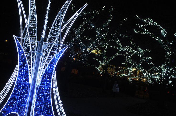 Shimmery and glittery illuminated lights at St Hilda's Church Gardens. #Christmas #southtyneside #festive