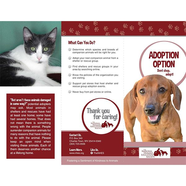 29 Best TriFold Animal Brochures Images On Pinterest