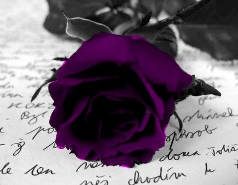 Purple Rose....prayers for those that do this                                                                                                                                                     More