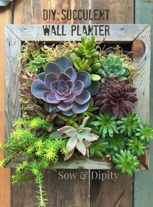 DIY Succulent Wall Planter                                                                                                                                                                                 More