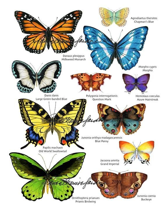 Colorful Butterfly Print Colorful Butterflies Butterfly Print