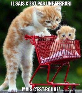 30-chat-drole-lolcat-francais-petit-chat-caption