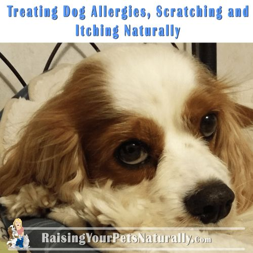 Natural Ways To Cure Dog Allergies