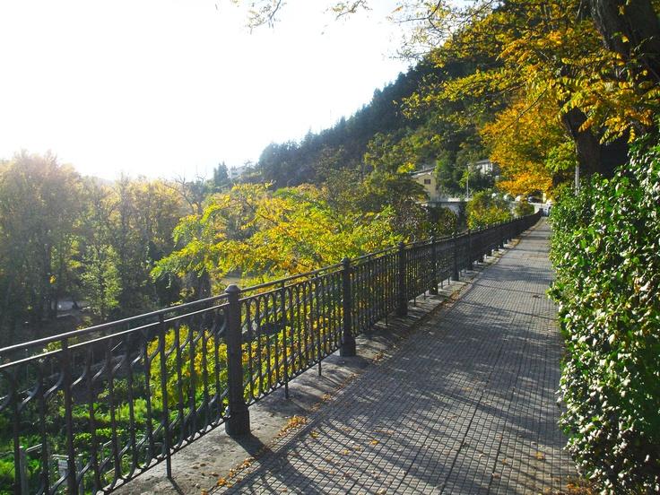 via Pergamino / viale in autunno