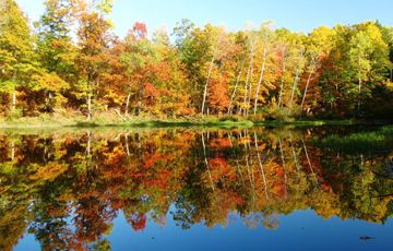 Fall colors report Wisconsin Dnr