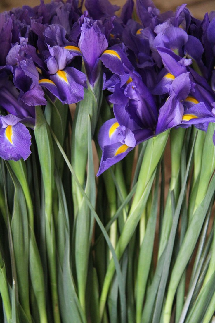 best purple images on pinterest lavender nature and purple stuff