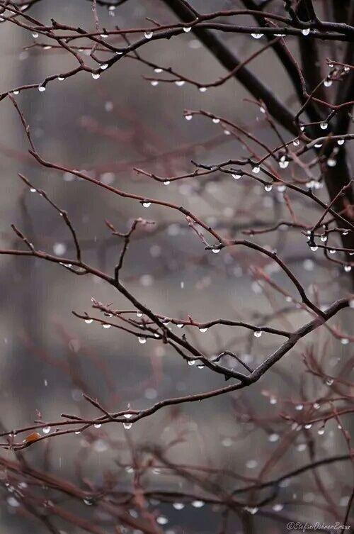 rain, дождь
