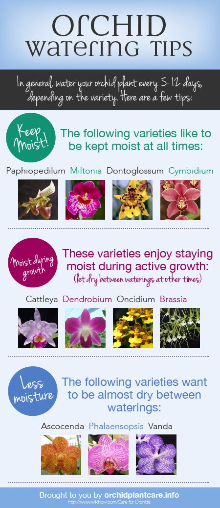 Every orchid species is unique. Luckily, there are some generalizations when it comes to watering your orchid. Check out our free watering cheat sheet.