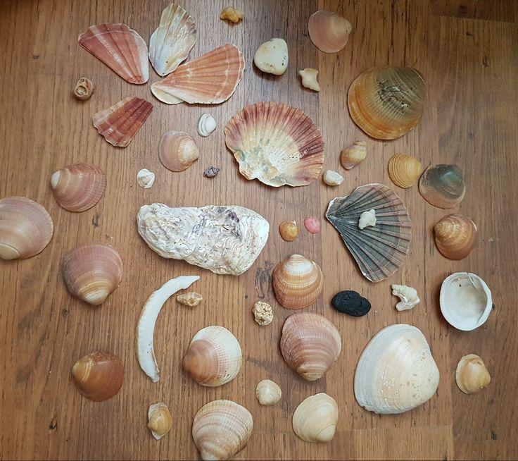Shells from Algarve Portugal