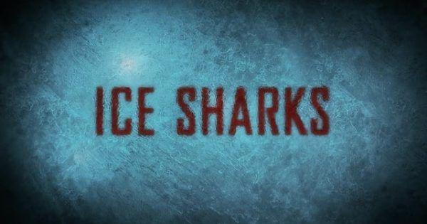 Hier der Trailer zum neuen Hai-Film Ice Sharks , der ziemlich geradlinig zu sein scheint. Wie eben Haie auch. Der Film ersteint am 26. Juli und vermutlich dann auch irgendwann bei uns auf Netflix A new breed of aggressive, ravenous sharks cracks the frozen ocean floor of an Arctic research station, devouring all who fall through. [ ]