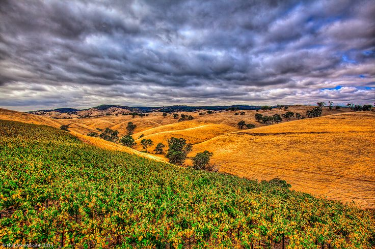 Beautiful Barossa Valley in South Australia is home to many world famous wineries. #travel #photography #SouthAustralia