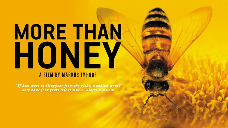 More Than Honey - Official USA Website. The best documentary on bees I have ever seen to the day.